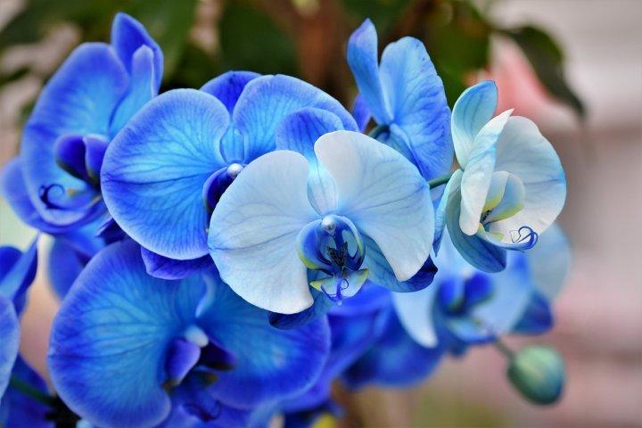 Orchideje a jejich pěstování v domácích podmínkách