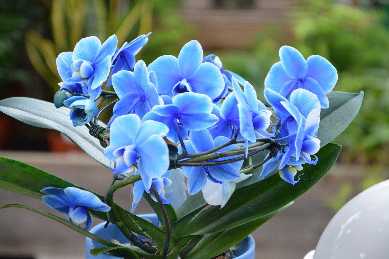 Úžasné květy