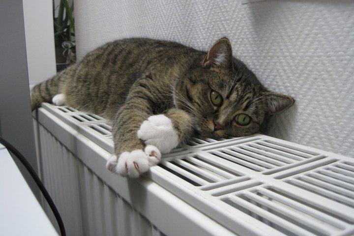 Jak vybrat radiátory do vašeho domu? Ukážeme vám, co je při rozhodování nejdůležitější!