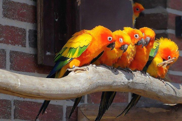 Voliéra s papoušky dodá vaší zahradě nádech exotiky. Víte, jak by měla správně vypadat?