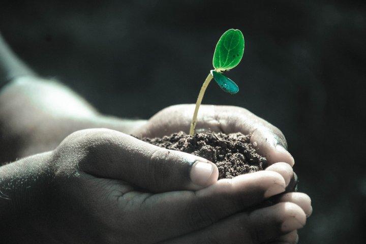 Víte, jakou půdu máte ve vaší zahradě? A víte, jak ji případně vylepšit, aby se u vás rostlinám dařilo?