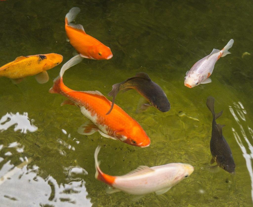 Nezapomeňte na ryby