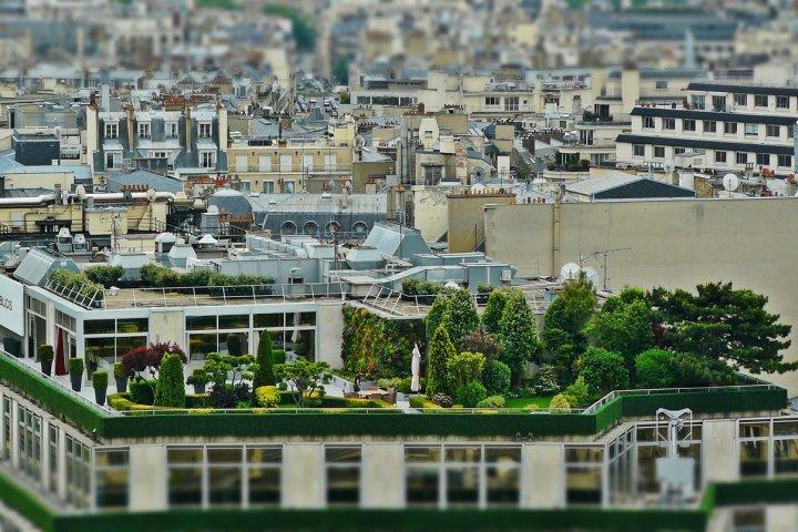 Výhody zelené střechy