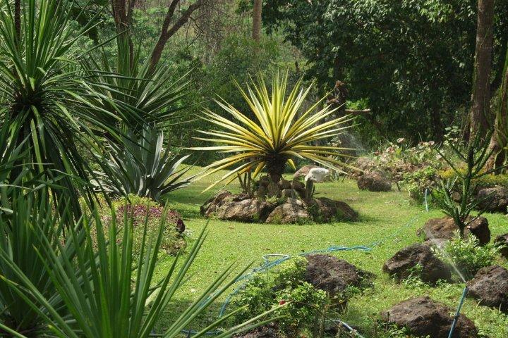 Tropické rostliny ve vaší zahradě?
