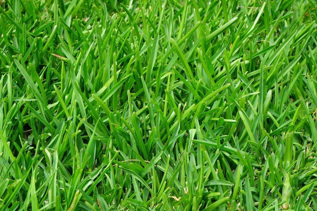 Hustý trávník