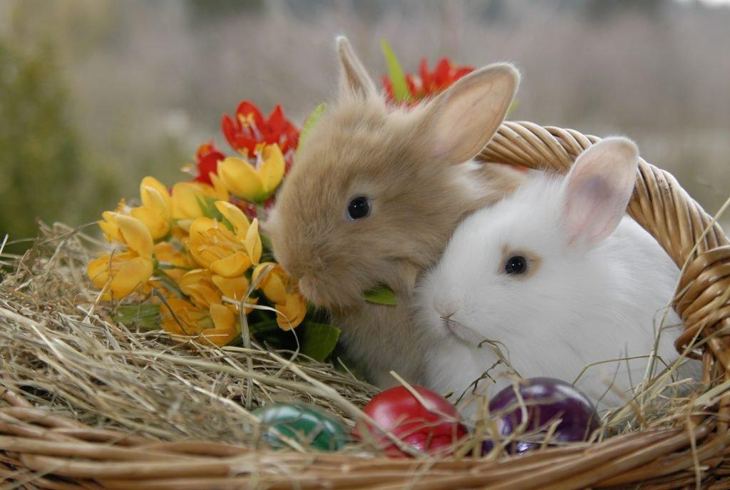 Velikonoční zajíččci