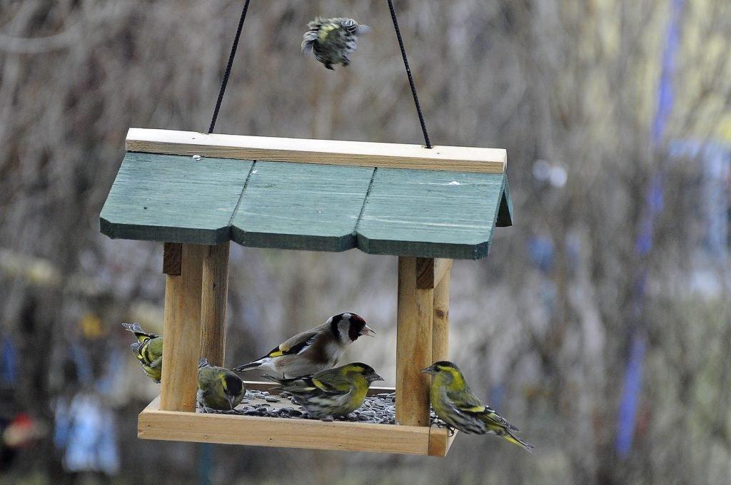 Ptáci si brzy zvyknou