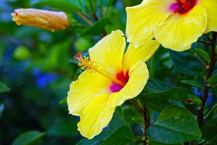 Pěstování nenáročných pokojových květin