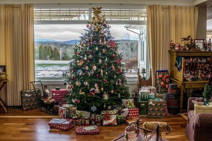 Už jste si vybrali vánoční stromek?