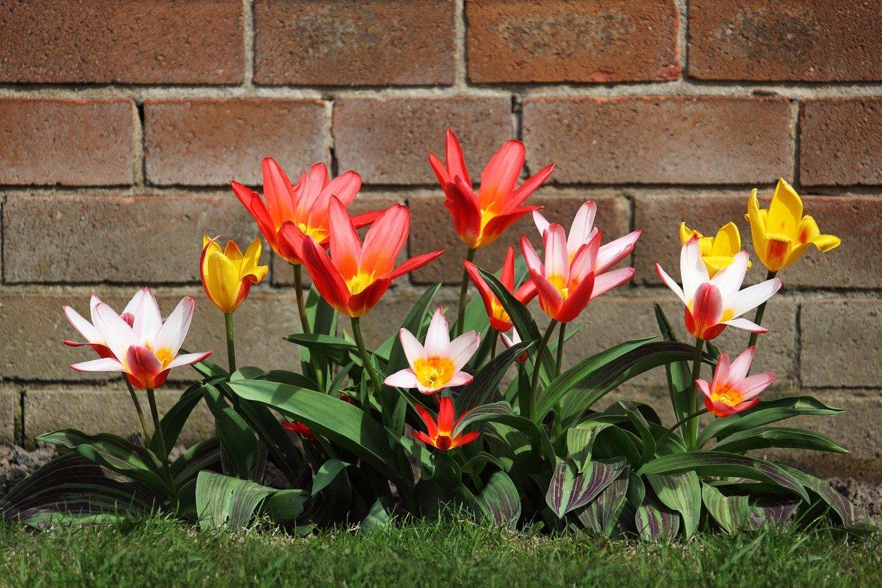 Zahrada se vám odmění