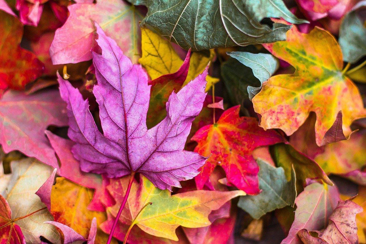 Kompostujte i spadané listí!