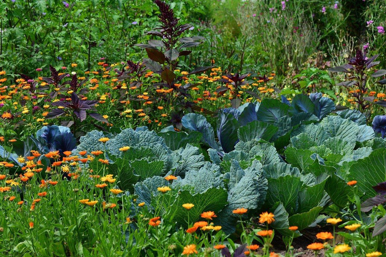 Zahrada díky kompostu kypí životem