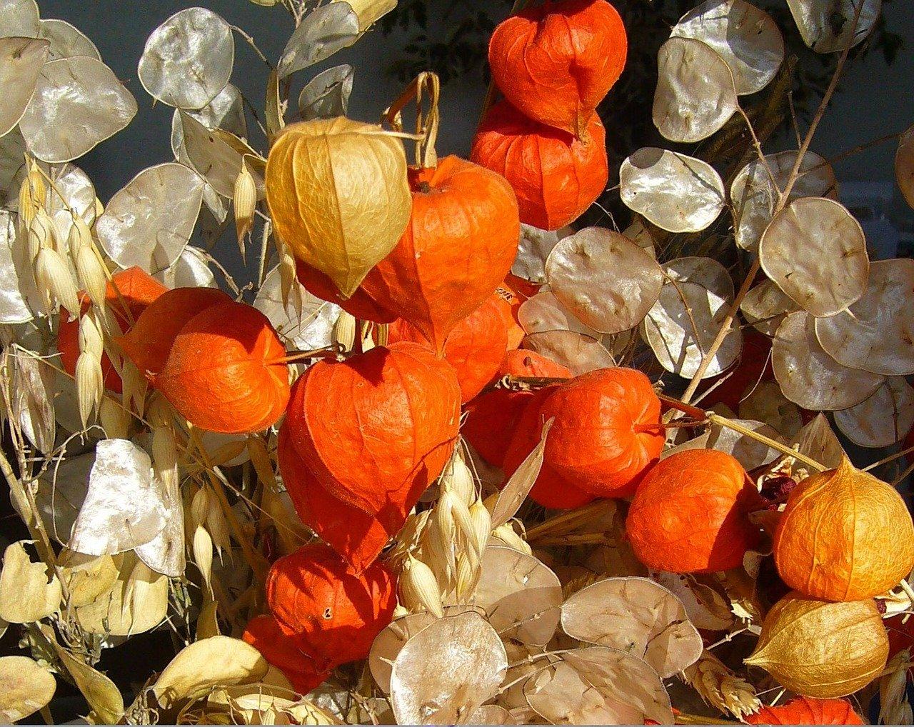 Oranžové plody mochyně
