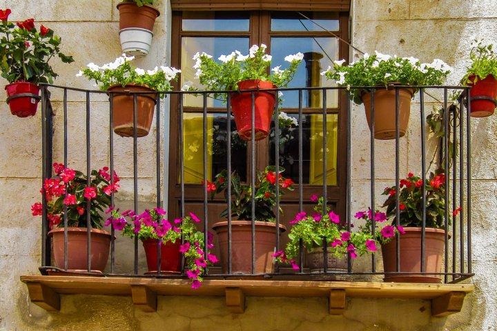 Pěstování balkonových květin není vůbec náročné. Musíte si však umět vybrat ty správné druhy!